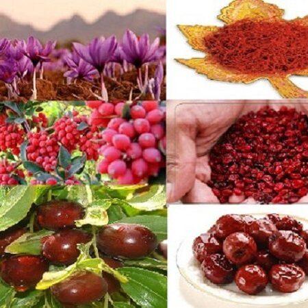 شرکت تعاونی کشاورزی زعفرانکاران و خشکبار قاینات